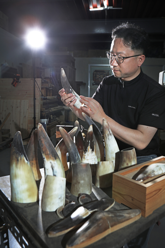 Han Ki-ho scrutinizes ox horns, which are key materials for hwagak crafts. [PARK SANG-MOON]