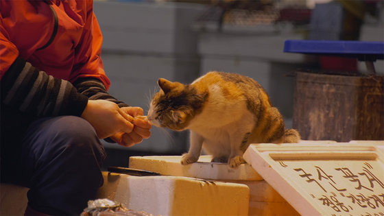 An old lady who is one of the sellers in Noryangjin Fish Market feeds this cat every day when it comes by. [M&CF, INDIESTORY]