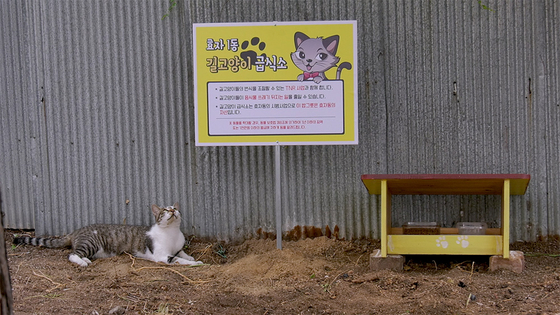 A spot in Hyoja Village where people distribute cat food for the cats in town. [M&CF, INDIESTORY]
