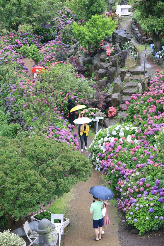 Tourists hold up umbrellas in a garden cafe in Jeju on Wednesday, as rainy season began in the southern island. [YONHAP]