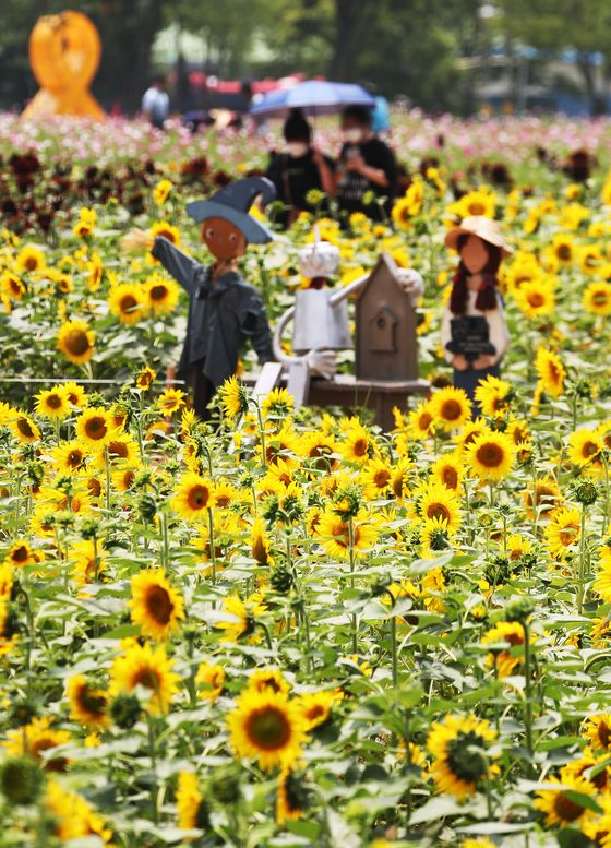 Tourists stroll in a field of sunflowers in full bloom in Ansan, Gyeonggi, on Wednesday. [YONHAP]