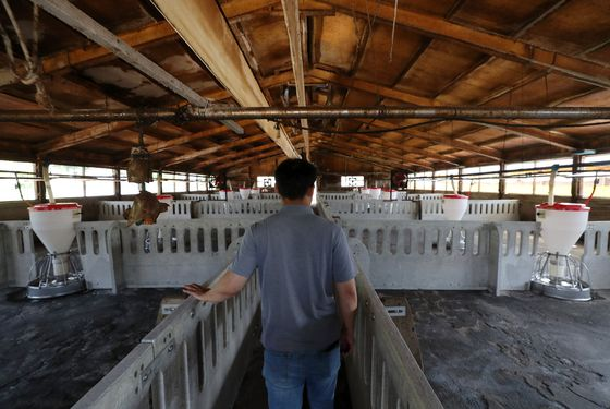 A farmer walks through his pig farm in Cheorwon County, Gangwon, which sits empty Thursday, due to an African swine fever outbreak. [YONHAP]