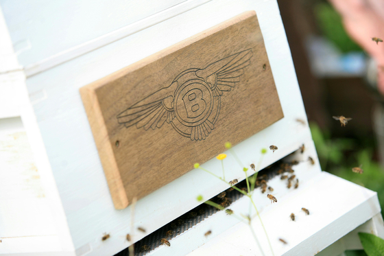 A Flying B emblem was engraved on a beehive Bentley is taking care of. [BENTLEY]