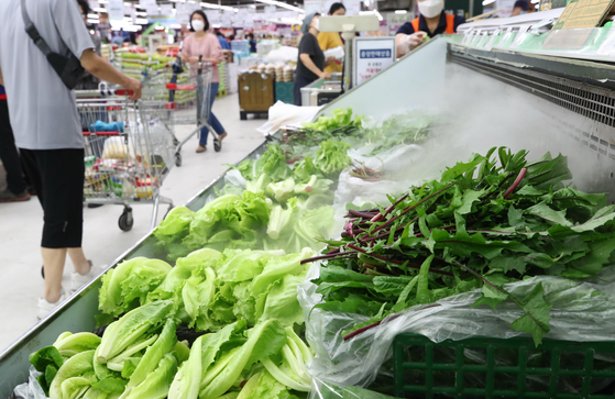 Leafy greens are displayed on the refrigerated shelves of a discount store in Seoul Sunday. The continued heavy rain in Korea is pushing vegetable prices up. The wholesale price of leafy greens, such as cabbage, lettuce and spinach, spiked by 60 to 107 percent compared to last month, according to the Korea Agro-Fisheries & Food Trade Corporation on Aug. 6. [YONHAP]