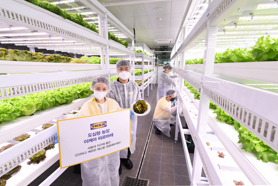 Employees promote IKEA Farmare, an urban vegetable farm demonstrated by IKEA for the first time globally at its Gwangmyeong branch in Gyeonggi. [IKEA KOREA]