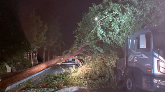 Workers working on moving a fallen tree off a road in Gwangju on Wednesday evening. [NEWS1]