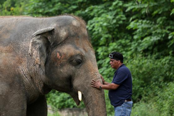 Amir Khalil, head of project development at FOUR PAWS International, sedates Kaavan, an elephant at the Marghazar Zoo in Islamabad, Pakistan, Sept 4, 2020. [REUTERS/YONHAP]