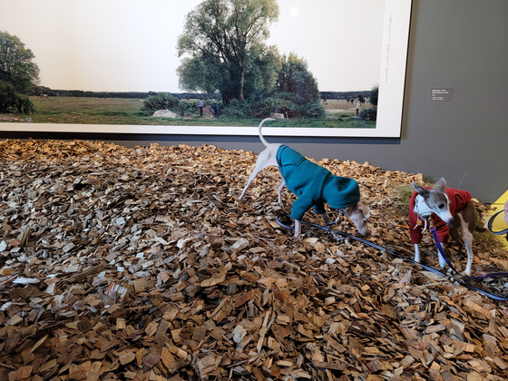 "Dogs Sedong, left, and Sesang walk on a hill installed by landscape architect Smooth Yoo as part of the ""A Museum for All, a Museum for Dogs"" exhibition at MMCA Seoul on Monday. [MOON SO-YOUNG]"