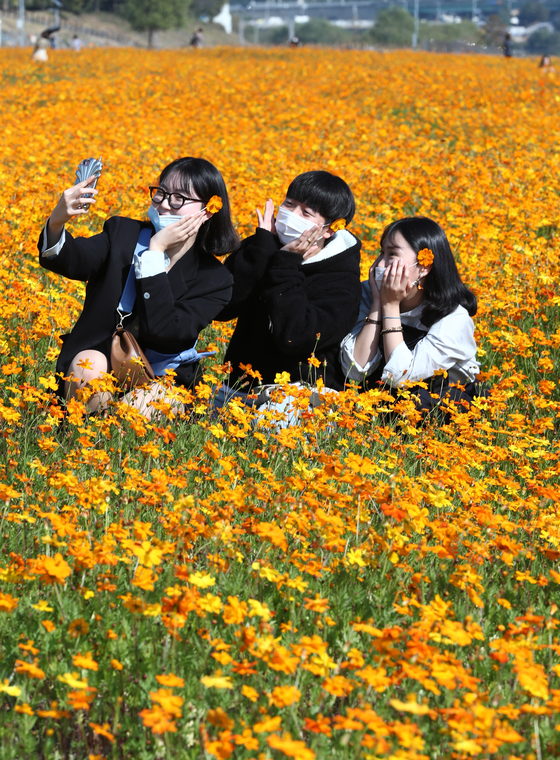 Domestic tourists relish the arrival of autumn in a field of yellow cosmos in Yuseong District, Daejeon, on Tuesday. [NEWS1]