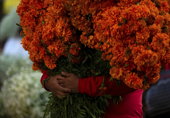 A young flower vendor holds a bouquet of marigolds, the iconic Day of the Dead flower for Mexicans that is known as cempasuchil, at the Jamaica Market, in Mexico City on Oct. 29, [AP/YONHAP]