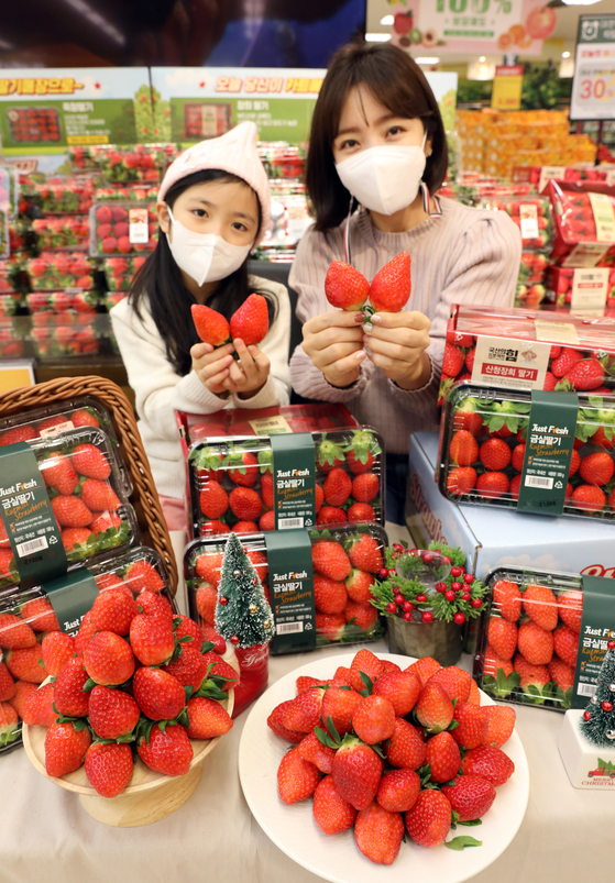 Models hold strawberries during a discount promotion event at Emart's Seongsu branch in eastern Seoul on Tuesday. Emart will hold its first week-long promotion of strawberries of the year starting on Thursday. [YONHAP]