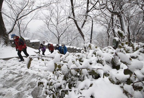 Snow covers Nam Mountain in central Seoul on Sunday as hikers trail up the mountain. [NEWS1]