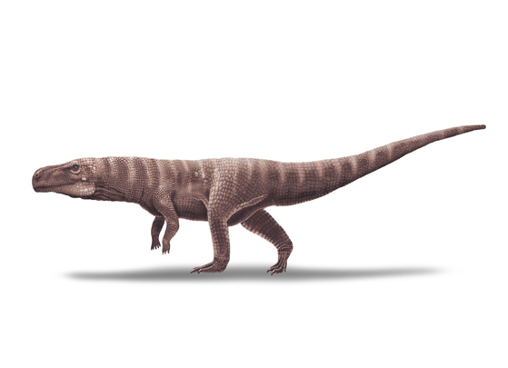 Reconstruction of a bipedal crocodile relative from the Early Cretaceous that left tracks in the Jinju Formation in Sacheon, South Gyeongsang. [CHINJU NATIONAL UNIVERSITY OF EDUCATION]