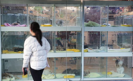 A passerby looks at cats and dogs at a pet shop in downtown Seoul Sunday. [YONHAP]