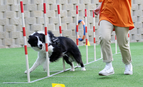 Dogs play freely at Anian Park in Ulsan. The opening of the center in September was part of the city's attempt to make itself pet-friendly for locals and visitors. [NEWS1]