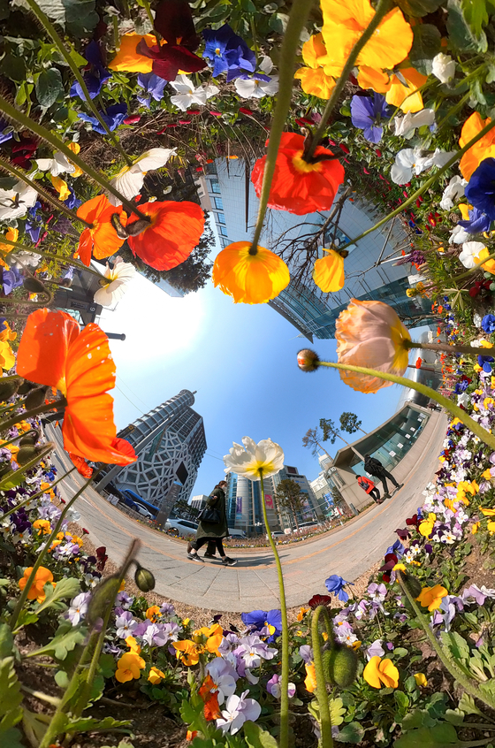 Flowers are in bloom near Dongdaemun History & Culture Park Station on Wednesday as the Seoul Metropolitan Government works to fill streets near major landmarks and medical facilities with flowers through the end of March. [YONHAP]