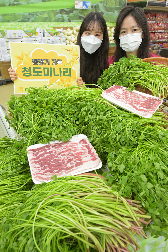 Models promote water dropwort, or minari in Korean, at Hanaro Mart's Yangjae branch in Seocho District, southern Seoul, on Wednesday. The plant, which was harvested in Cheongdo County in North Gyeongsang, is known to remove toxins from the body and purify blood. [YONHAP]