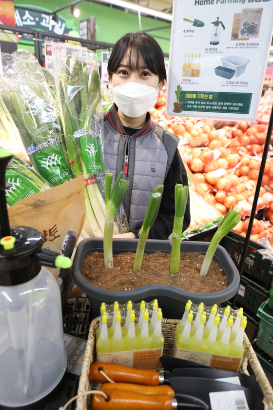 A model promotes gardening products at Lotte Mart's Gwangju Suwan branch in Gwangju. As the price of leeks has been rising, Lotte Mart has started selling products that allow customers to grow their own. [YONHAP]