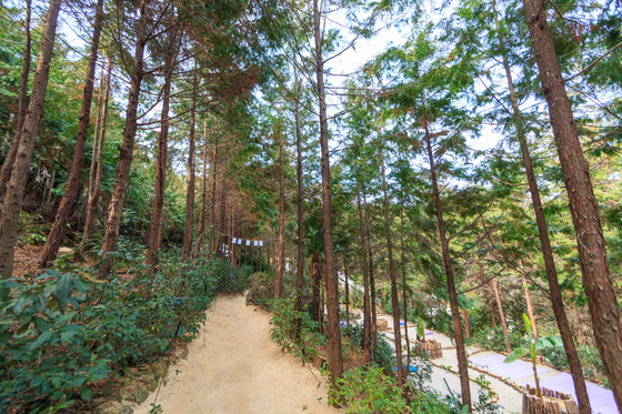 A trail at Napory Farm in Tongyeong, South Gyeongsang, is covered with cypress sawdust. [LIETTO]