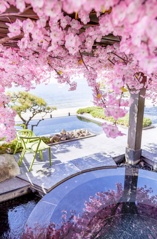 Paradies Hotel Busan offers a chance to bathe under the cherry blossom trees at its spa facility called Cimer. [PARADISE HOTEL BUSAN]