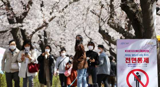 A notice at the entrance to a cherry-blossom-canopied street behind the National Assembly complex in Yeouido, western Seoul, on Tuesday, inform pedestrians that they are not allowed from April 2 to April 12. The off-limit notice is a social distancing measure.  [NEWS1]