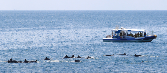 A group of Indo-Pacific bottlenose dolphins passes a tourist ship in coastal waters near Daejeong-eup, Seogwipo, Jeju Island, amid sunny weather on Monday. [YONHAP]
