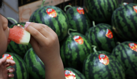 A customer takes a bite out of a watermelon at a traditional market in Seoul on Thursday. As temperature has been rising faster than in previous years, summer fruits have been appearing at stores. Temperatures in some areas including Seoul have risen to 27 degrees Celsius on Thursday. [YONHAP]