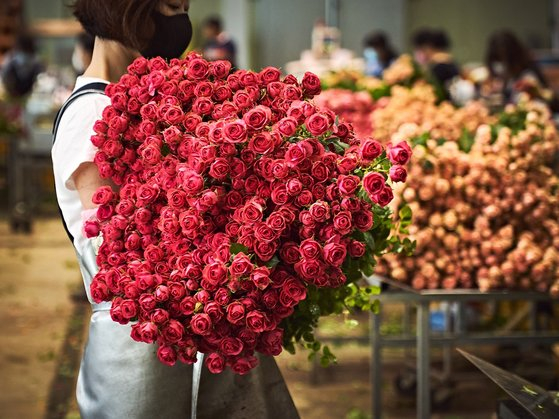 A florist prepares roses for delivery. [MARKET KURLY]
