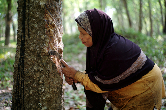 A rubber farmer taps a rubber tree in Narathiwat province, Thailand. [REUTERS/YONHAP]