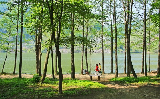The landscape of Nami Island, which is widely enjoyed by visitors in spring, plays host to the biannual Nami International Children's Book Festival in May. [NAMI ISLAND]