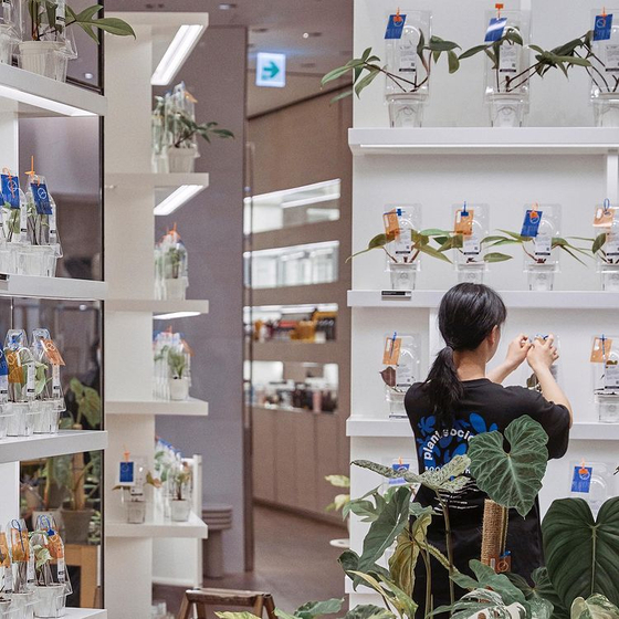 An employee arranges plants at Plant Society 1's pop-up store in Boon the Shop's Cheongdam branch in southern Seoul. [PLANT SOCIETY 1, SCREENCAPTURE]