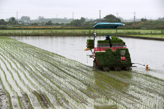 A farmer operates a rice transplanter in a rice paddy in Bannam-myeon in Naju, South Jeolla, on Thursday. Rainfall across the country on Thursday provided good conditions for rice farming. [YONHAP]