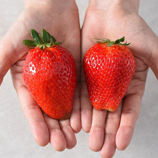 King's berry strawberries. The fruit is bigger than normal strawberries, similar to the size of a person's palm. [SSG.COM]