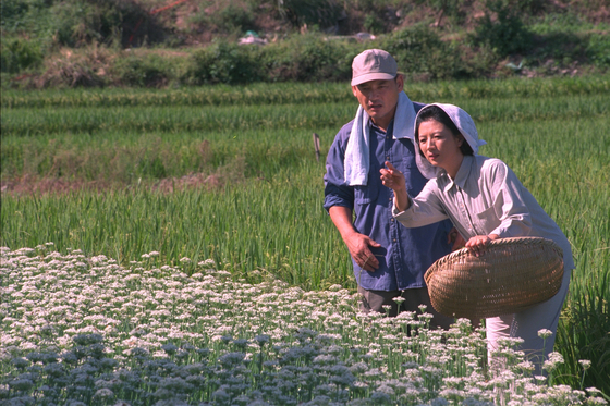 """A scene from Korea's longest-running television series ″Country Diaries"""" (1980-2002) [MBC]"""