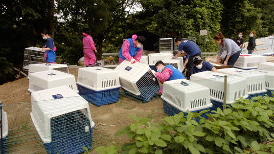 Animal rights organization CARE rescues dogs from the dog farm in Namyangju, Gyeonggi.[JUST BRIGHT PRODUCTIONS]