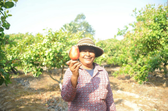 A local in Cambodia holding up a cashew apple accessory fruit, after cashew trees were planted to help reforest an area of a farming community. [KOREA FOREST SERVICE]