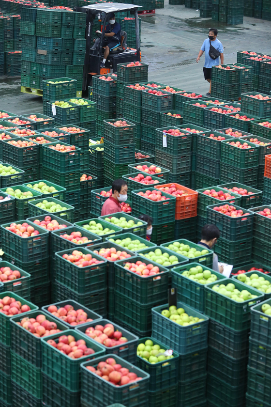 Newly harvested apples are put up for auction at Garak Market in Songpa District, southern Seoul, on Wednesday. The apples are in season before the Chuseok holiday. [YONHAP]