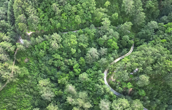 An aerial view of Uljin Geumgang Pine Tree trail in Uljin County, North Gyeongsang. It is one of the largest colonies of geumgang pine tree in Korea, whose lumber was used to make royal coffins. [SOHN MIN-HO]