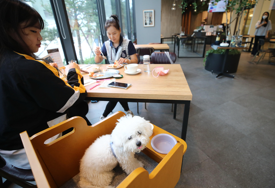 Customers enjoy a meal with their pet sitting at the same table at a high-end pet shop at Hyundai Premium Outlet Space1 in Namyangju, Gyeonggi on Tuesday. According to a study by Statistics Korea, in 2020 there were nearly 3.13 million households with pets, accounting for 15 percent of all households. KB Financial Group's research center estimates that the pet market will be worth 6 trillion won ($5 billion) in Korea this year. [YONHAP]