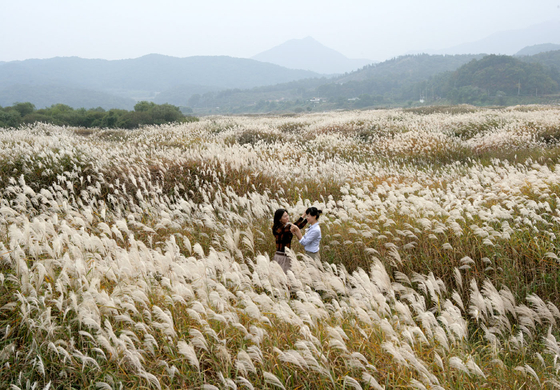 This field of reeds in Chungju, North Chungcheong, is a nice spot for those who want to see some less typical fall landscapes, away from red and yellow leaves. [KOREA TOURISM ORGANIZATION]