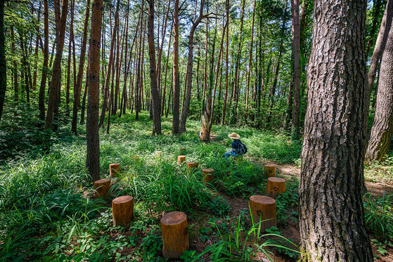 Samcheok's Healing Life Forest offers some greenery even during the fall season for those who want to experience the feel of being in a traditional forest. [KOREA TOURISM ORGANIZATION]