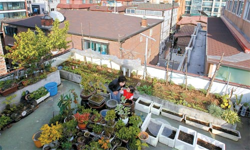 Rooftop Gardens Cultivating Community